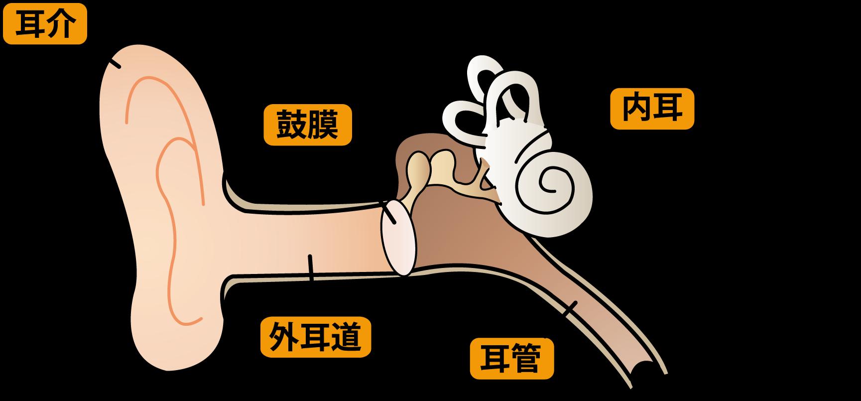 なぜ子どもは中耳炎にかかりやすい?